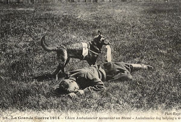 The Great War. 1914. Ambulance dog helps rescue a wounded man.