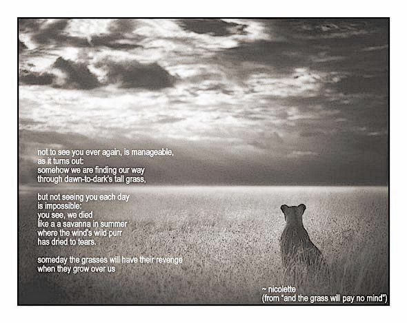 And the grass will pay no mind © Nicolette van der Walt