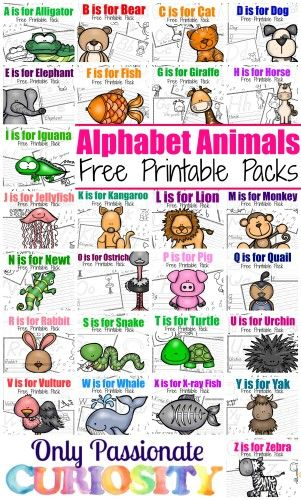 TONS of free ABC printables for Preschool/Kindergarten. You could use these for a free year of curriculum- just add math!