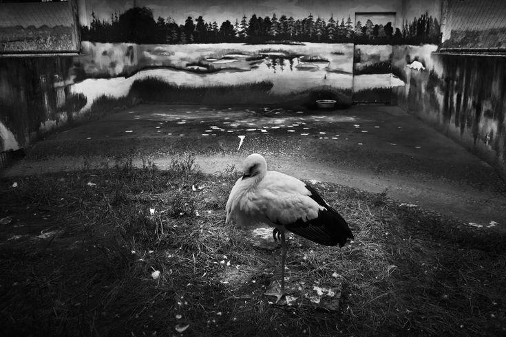 Xiaoqun Zheng - 2013 Photo Contest | World Press Photo