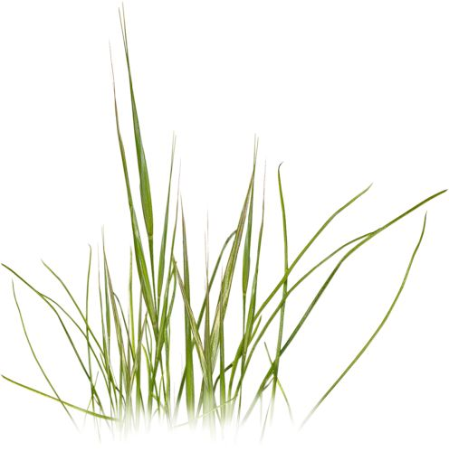 скрап_клипарт — «NLD Grass 4.png» на Яндекс.Фотках