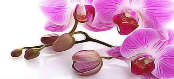 Orchid es comment les faire refleurir astuces et - Doit on couper les tiges des orchidees ...
