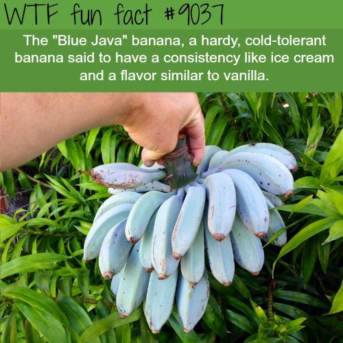 Amazing And Weird Facts You Probably Didnt Know