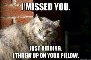 Cat funny