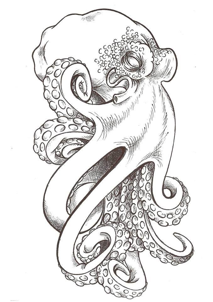 Octopus By Jazzi Kit D904omg Jpg 678 215 960 Octopi