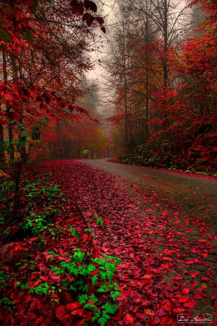 ~ Autumn's Brilliance...