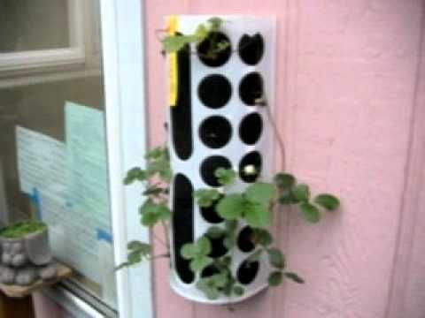 A brief overview of a very simple, inexpensive method for growing strawberries on the outside of wall your home.  The Ikea basket used for this can be found at   http://www.ikea.com/us/en/catalog/products/60128661/#/80010222