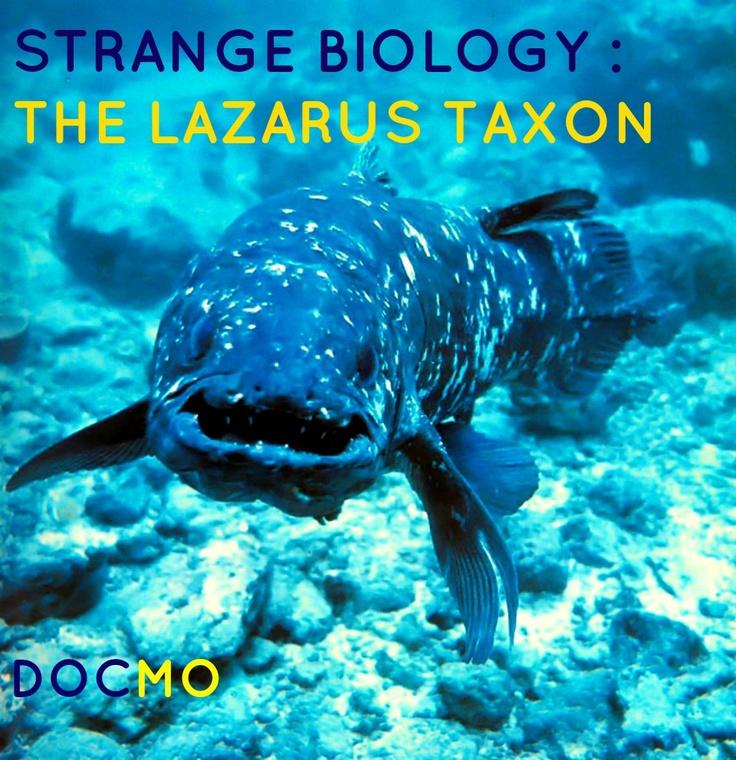 Strange Biology: The Lazarus Taxon