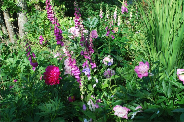 Paeonies Kansas, Sarah Bernhardt and Bowl of Beauty with Digitalis