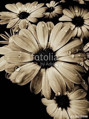 """Pobierz zdjęcie royalty free  """"Szafranek"""" autorstwa nataliamatusz w najniższej cenie na Fotolia.com. Przeglądaj naszą bazę tanich obrazów online i odnajdź doskonałe zdjęcie stockowe do Twoich projektów reklamowych!"""