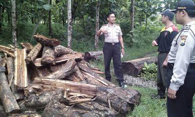 Oknum Perangkat Desa Ngrayun Ponorogo Jadi Pembalak Kayu Pinus