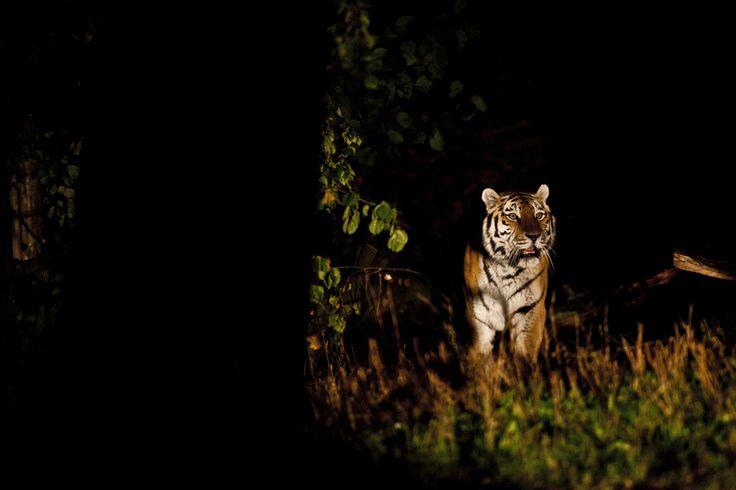 vaaka rasvaprosentti tiger nightclub helsinki
