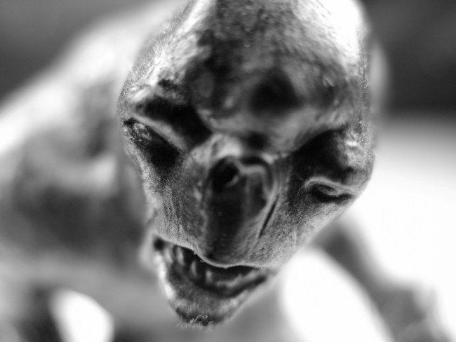 Неуловимый монстр – Чупакабра