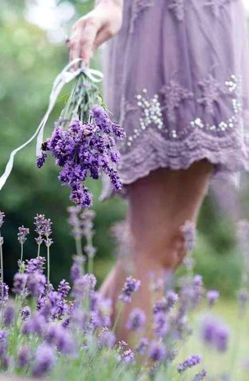 #French Lavender