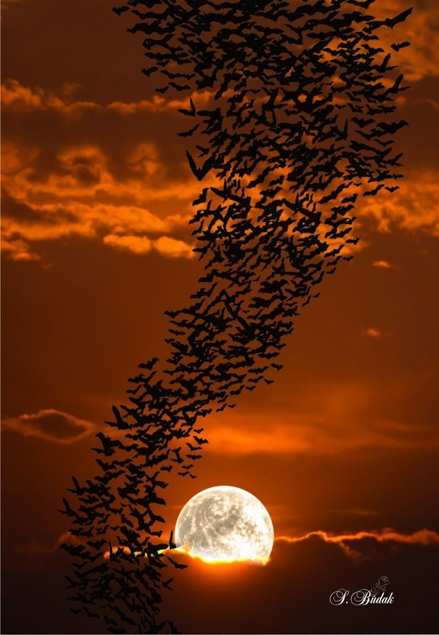 Autumn ~ swirling bats at sunset