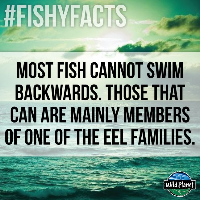 12 best images about ocean facts on pinterest seasons for Interesting facts about fish