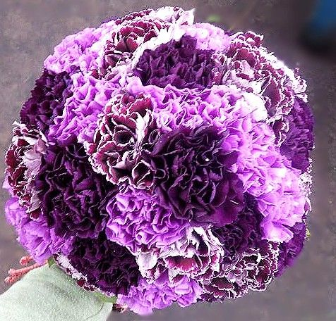 purple carnation wedding bouquets - Google Search - except as balls