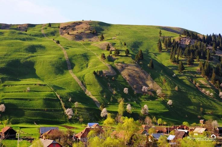 Gyimesi tavasz  Fotó: Rozsnyai Hunor