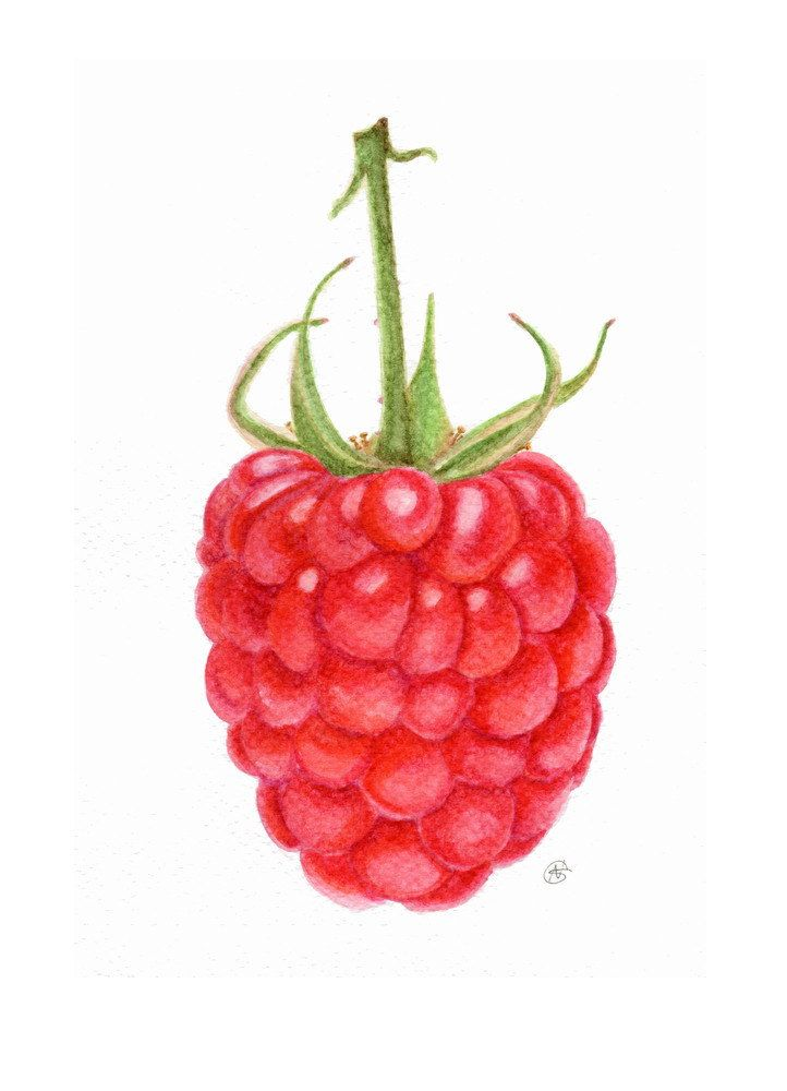Raspberry, Watercolour by ForestSpiritArt