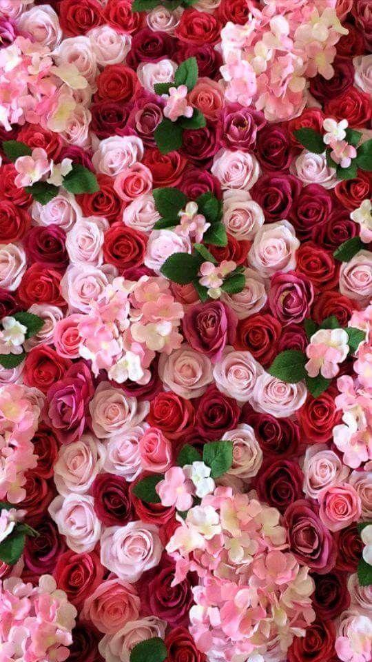 Rose Flower Bed