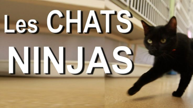 http://all-images.net/les-chats-ninjas/