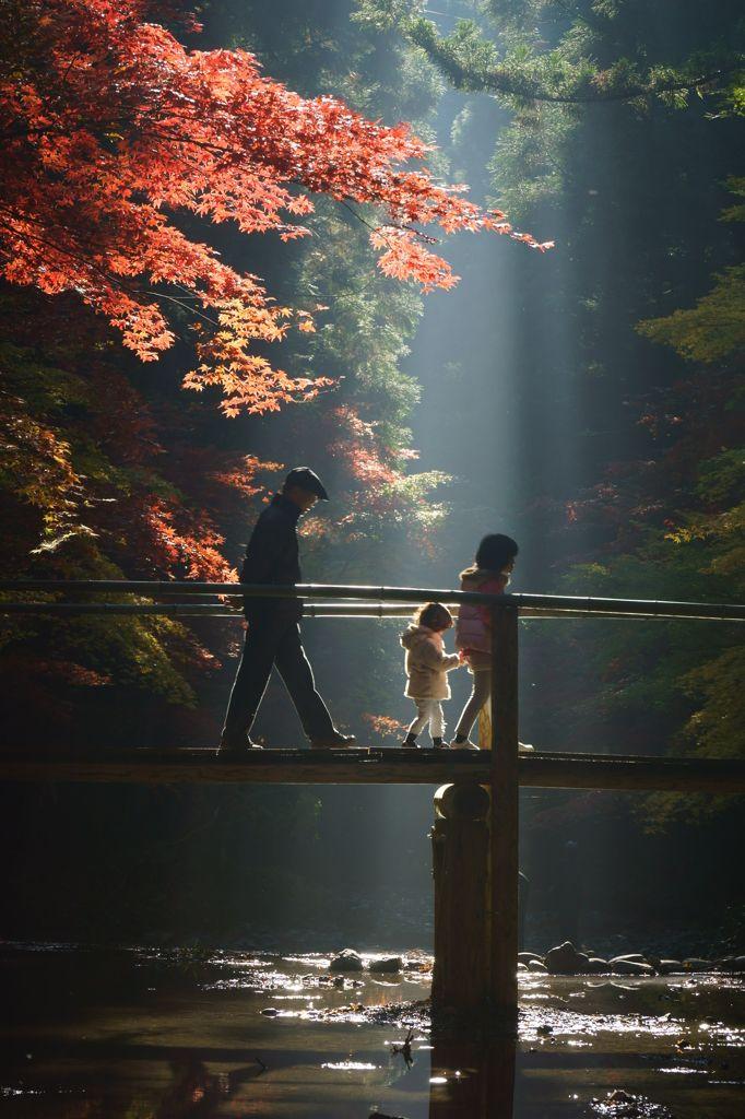 Shizuoka, Japan   木洩れ陽