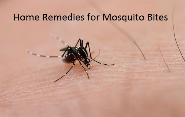 Home Remedies for Mosquito Bites Treatment Mosquito bites are common especially if you leave around the jungle or gardens. One surely does not feel the bite of the mosquito but will definitely ...