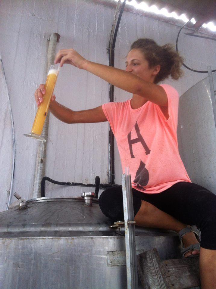 Harvest at Lyrarakis Wines