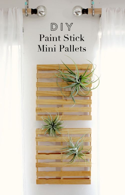 DIY paint stick mini pallets // Weekend project? I think so. Also never heard of air plants, but definitely need to see if I can find some
