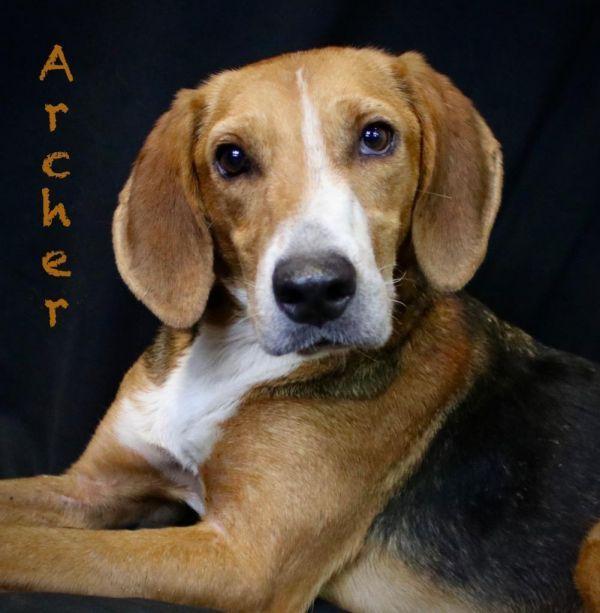Dogs For Adoption Near Little Rock Ar Petfinder Pet Adoption