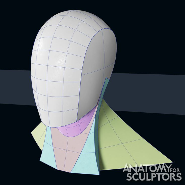 Artstation head and neck form step by step anatomy