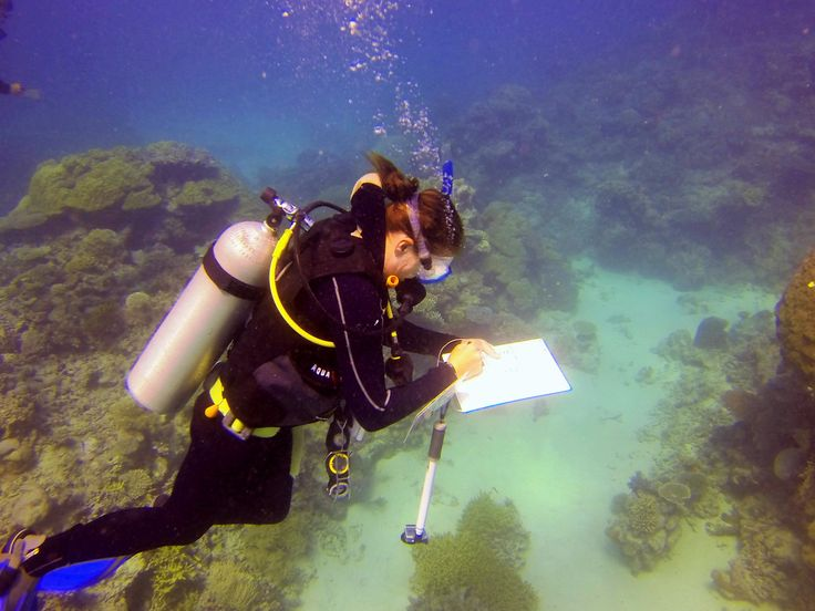 Monitoring coral health on the Great Barrier Reef #marineconservation #nolimitadventures