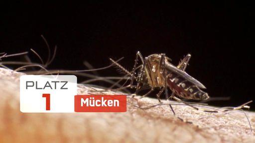 Lebensgefährliche Tiere: Mücken töten mehr Menschen als Haie