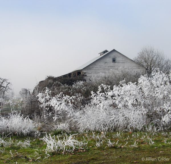 An icy morning. A very, very old pear orchard Barn. Rogue Valley, southern Oregon. Photo: Jillian Crider - artistjillian - DreamyPapers