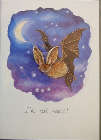 I'm all ears, Bat Conservation International