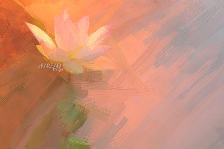 https://flic.kr/p/qv2oSg | Lotus Flower Paintings - Image Based - Akvis Oil Paint Filter  - | Lotus Flower Paintings - Image Based - Akvis Oil Paint Filter - akvis.com/en/oilpaint/index.php DD0A4262-ls5-1000
