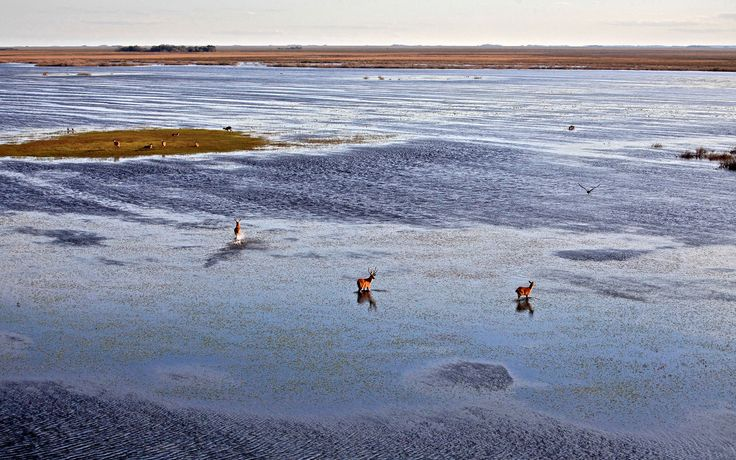 Argentina is home to endless pampas, Patagonian desert, and the world's second-largest wetlands, with an indigenous wildlife population that's been drastically dwindling, until now.