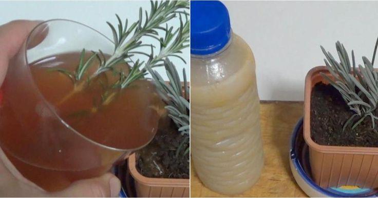 Cómo utilizar enraizantes caseros en casa para unas plantas de 10