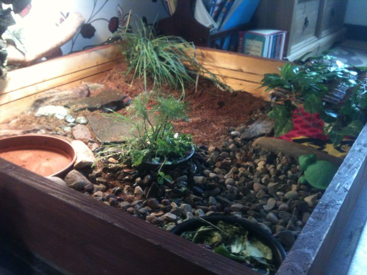 Tables Tortoise Table And Indoor On Pinterest