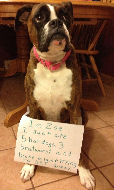 Dog Eating Dentures