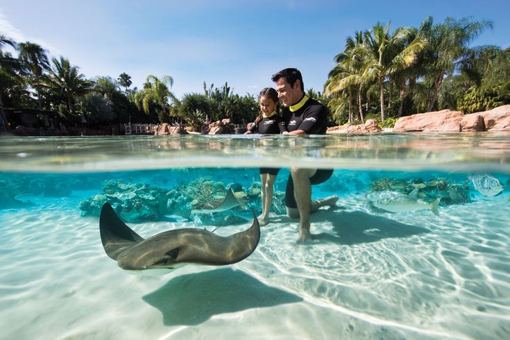 The Grand Reef spans over 2.5 acres, featuring multiple levels of exploration suitable for all ages.