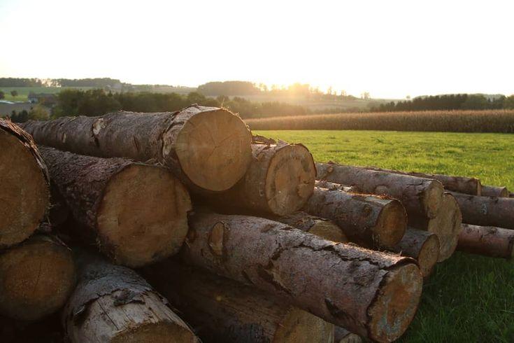 🌲🌳Holzfakt🌳🌲 47,6 % der Fläche von Österreich sind Wald. Diese run…