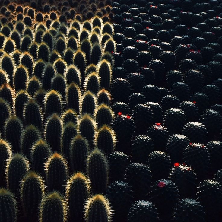 Cactus | Succulents | Plants | Outdoors | Interior Design | Pattern | Wallpaper | Dark