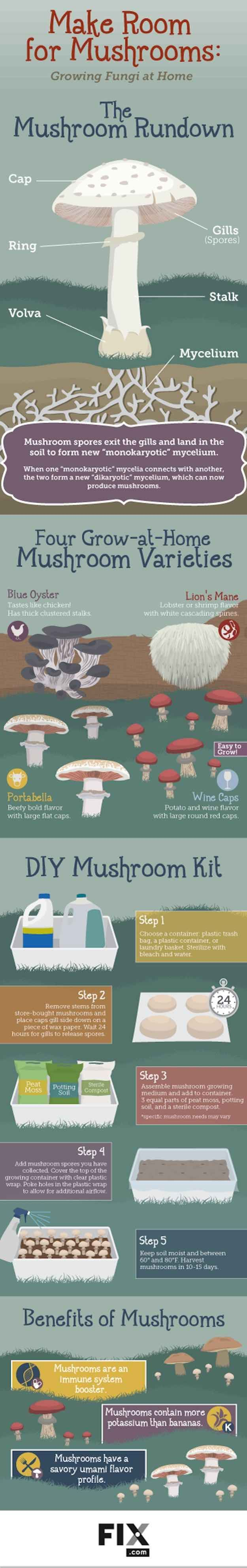Check out Easy Guide To Growing Mushrooms At Home [Infographics] at homesteading.com/...