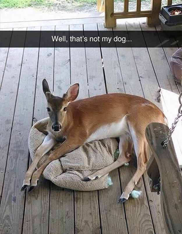 27 Times Tumblr Perfectly Summed Up Nature - Some cute things on here :3