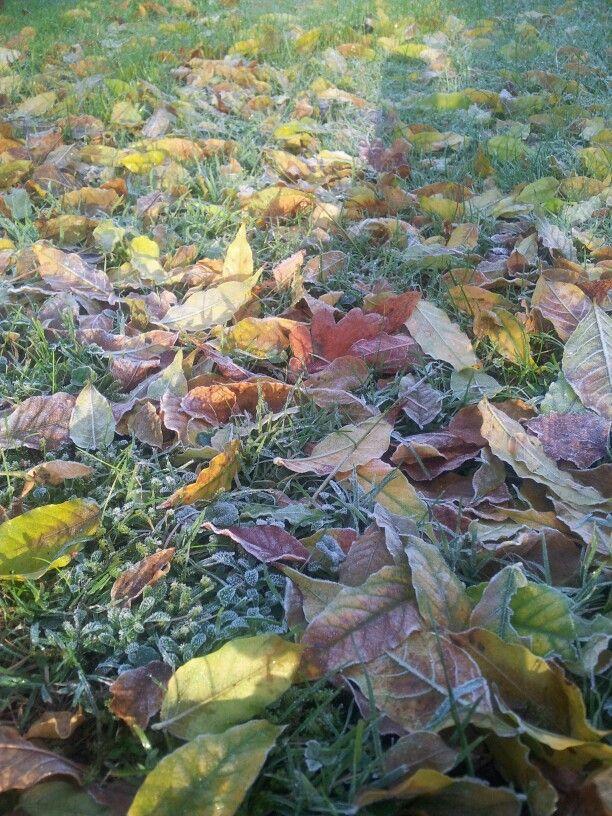 Herbstabschied