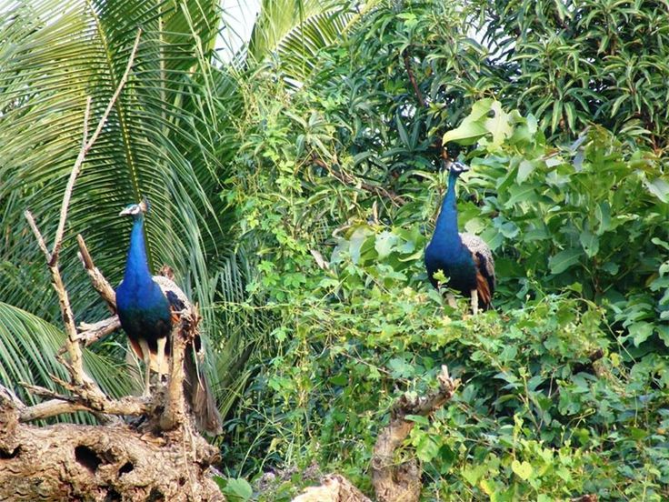 Barda Wildlife Sanctuary - in Porbandar, Gujarat, India