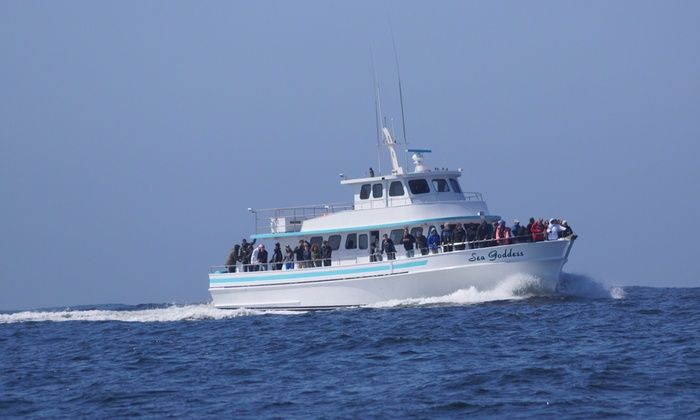 Sea Goddess Whale Watching - Moss Landing: Up to 24% Off Whale Watching at Sea Goddess Whale Watching