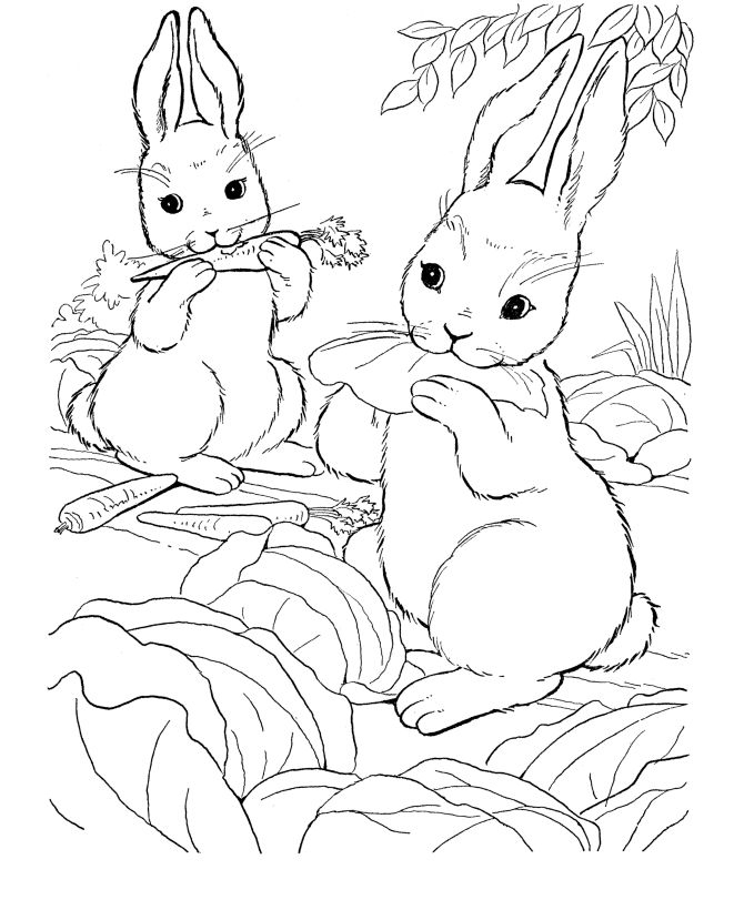animal coloring pages bing images