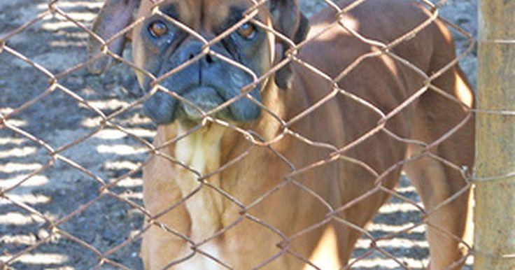 Como deixar uma cerca de tela à prova de cães. As cercas de tela de arame são uma boa proteção para um quintal. Elas mantêm animais grandes e cães desconhecidos do lado de fora, e crianças e animais de estimação do lado de dentro. No entanto, os cachorros mais espertos e criativos são capazes de achar maneiras para passar a cerca. Com o mínimo de esforço e custo, você pode encontrar e acabar ...